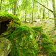 Moss in  forest — Stock Photo #50795727