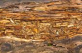 Old rotten wood — Stock Photo