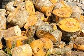 Cortar troncos de árbol — Foto de Stock