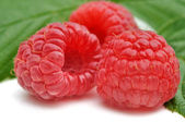 Threesome of raspberries — Stock Photo