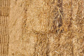 Closep on straw — Stock Photo