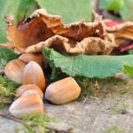 ������, ������: Hazelnuts and hazel leaves