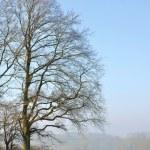 Large oak tree in winter — Stock Photo #14562065