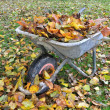 Stock Photo: Wheelbarrow filled with leaves