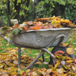 Collecting dead leaves — Stock Photo