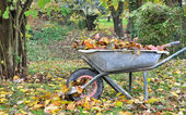 Weelbarrow filled with leaves — Stock Photo