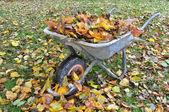 Carrinho de mão cheio de folhas — Foto Stock
