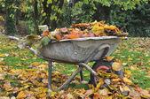 Coleta de folhas mortas — Foto Stock
