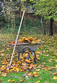 Collecting dead leaves — Foto Stock