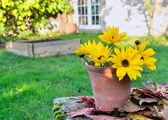 Lichtgevende madeliefjes in een tuin — Stockfoto