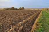 Agricultural land — Stock Photo