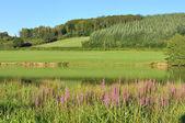Landscape Morvan (France) — Stock Photo