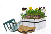 Planting of hyacinths in a flower pot — Stock Photo