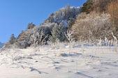 Vegetazione di montagna in inverno — Foto Stock