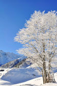 Tree in winter — Stock fotografie
