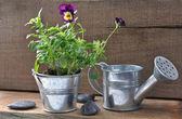 Mini set of rustic garden — Stock Photo