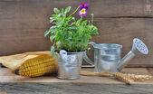A rustic mini garden set — Stock Photo