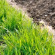 Green grass — Stock Photo #22959420