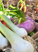 Fresh garden vegetables — Stock Photo