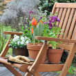 Spring flowers in a chair - Stock fotografie