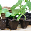 Stock Photo: Various seedlings