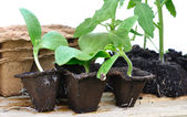 Various seedlings — Stock Photo