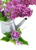 Arredamento con lilla — Foto Stock