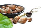 Hazelnuts — Photo