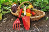 Seasonal vegetables with tools — Stock Photo