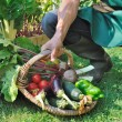 Stock Photo: Freshly harvested vegetables