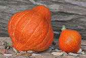 Big and little pumpking — Stock Photo