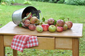 Harvested apples — Stock Photo