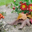 Stock Photo: Chrysanthemum flowers and fallen leaves