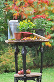 Fall flowers pots — Stock Photo