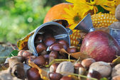 Chestnuts and other seasonal fruits — Stock Photo