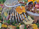 Leaf rake — Stock Photo