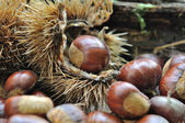 Pile of chestnut — Stock Photo