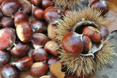 Close on chestnuts — Stock Photo