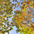 Autum colors — Stock Photo