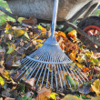 Collecting leaves in garden — Foto Stock