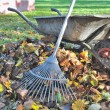 Collecting leaves in garden — Stock Photo