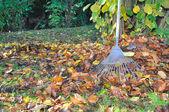 Zbieranie liści — Zdjęcie stockowe