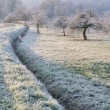Stock Photo: Countryside in winter