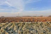 Field in winter — Stock Photo