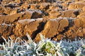 Clods covered by frost — Stock Photo
