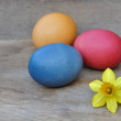 Easter eggs and daffodil — Stock Photo