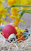 Nergis ile Paskalya yortusu yumurta — Stok fotoğraf