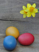 Easter eggs and daffodil — Photo