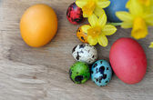 Easter eggs with daffodils — Photo