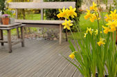 Narcissus on terrace — Stock Photo